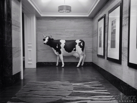 There is a cow in the lobby.